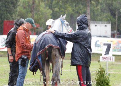 La visita veterinaria sotto la pioggia