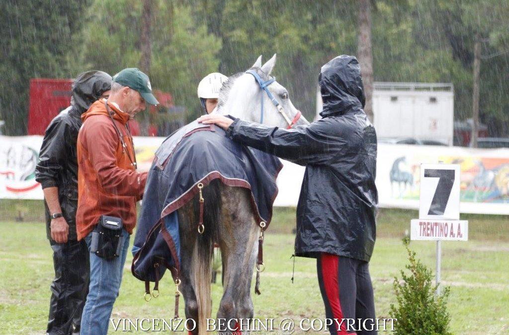 La forza nello sport di endurance equestre