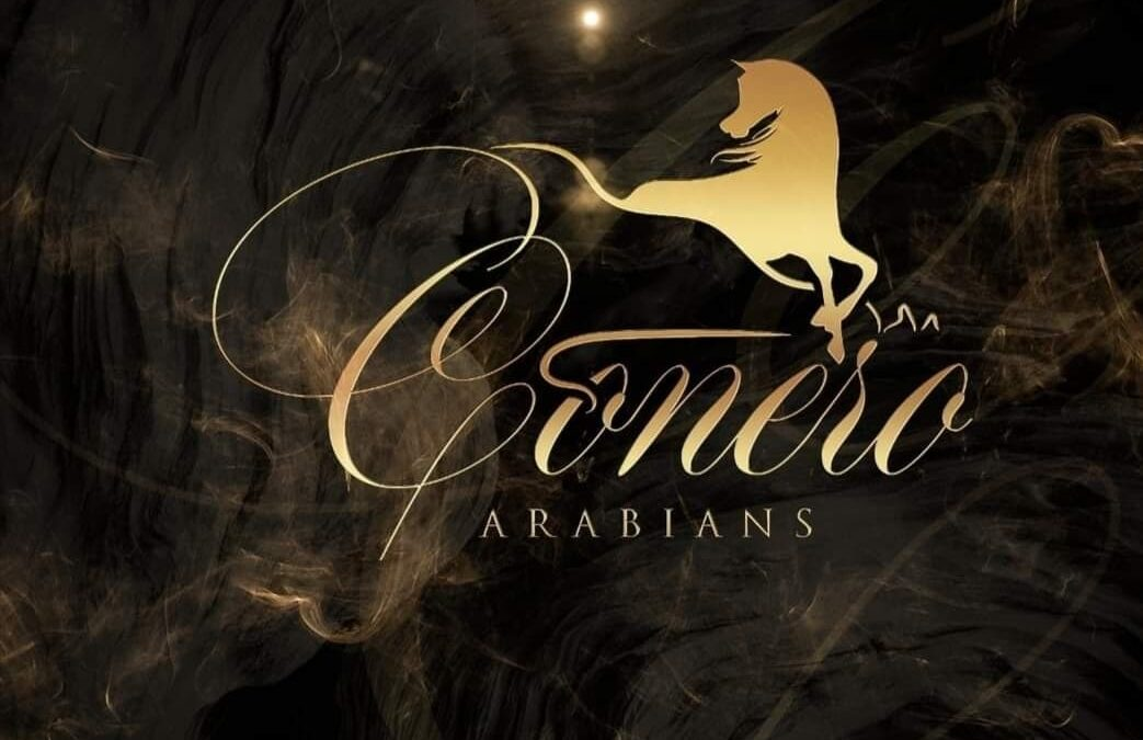 Conero Arabians