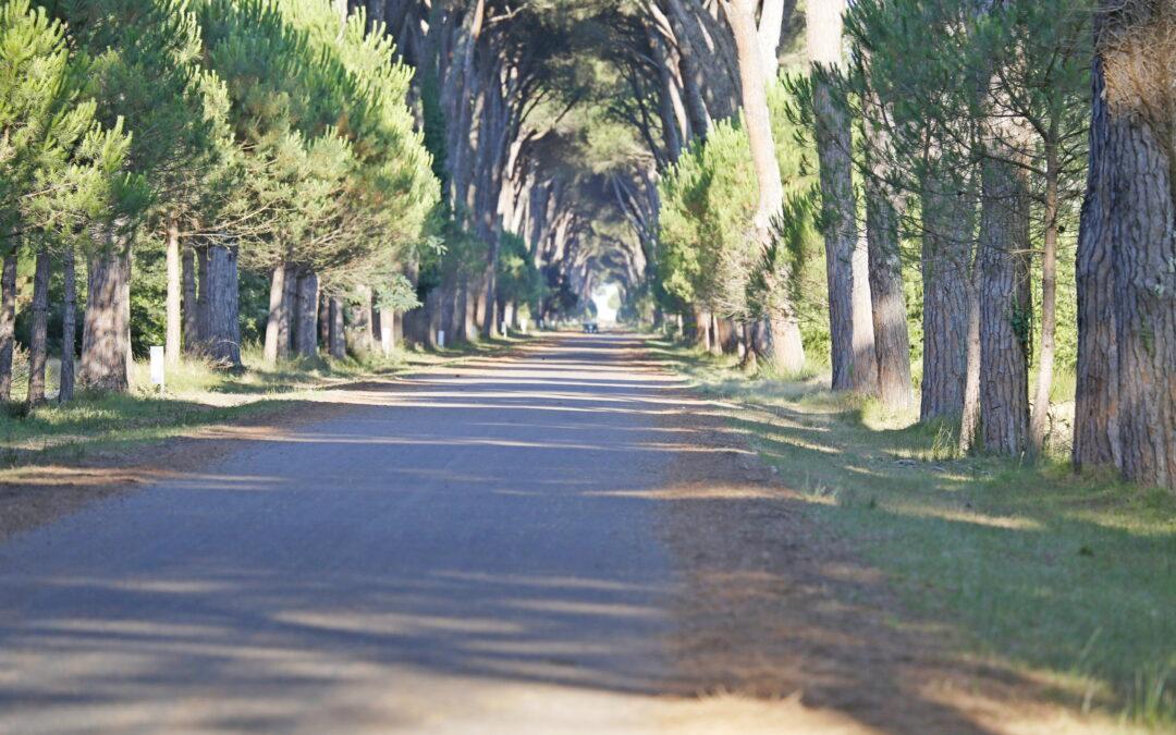 22 maggio 2021  – Longines FEI World Endurance Championship – Pisa San Rossore CH-M-E 160 km